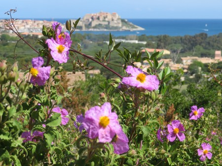 Korsika Wanderwoche - Terminumbuchung
